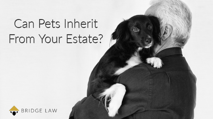 Can pets and animals inherit from your estate once you pass away? Bridge Law's latest blog answers this question and how to leave provisions for your pets in your Will.